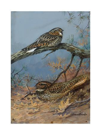 https://imgc.artprintimages.com/img/print/painting-of-a-whippoorwill-and-a-chuck-will-s-widow_u-l-pojt5y0.jpg?p=0