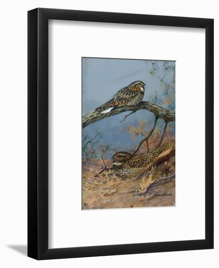 Painting of a Whippoorwill and a Chuck-Will'S-Widow-Allan Brooks-Framed Giclee Print