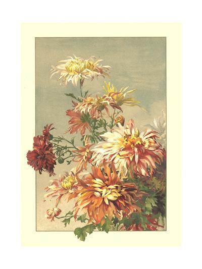 Painting of Orange, Pink, and Red Chrysanthemums--Art Print