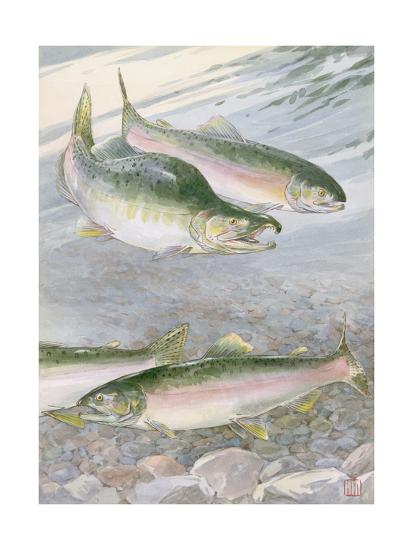 Painting of Pink Salmon at their Nest, with Typical Hump-Backed Male-Hashime Murayama-Photographic Print
