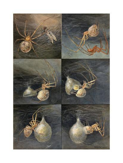Painting of Several Spiders, Theridion Tepidariorum, at Work-Hashime Murayama-Giclee Print