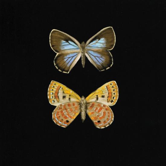 Pair of Butterflies on Black-Joanna Charlotte-Art Print