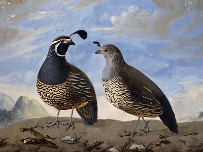 Pair of Californian Partridges--Giclee Print