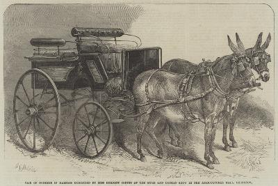 Pair of Donkeys in Harness Exhibited by Miss Burdett Coutts at the Mule and Donkey Show in the Agri-Harden Sidney Melville-Giclee Print
