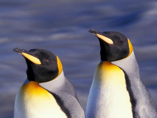 Pair of King Penguins with Rushing Water, South Georgia Island-Art Wolfe-Photographic Print