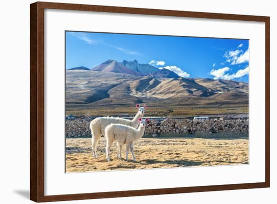 Pair of Llamas-jkraft5-Framed Photographic Print