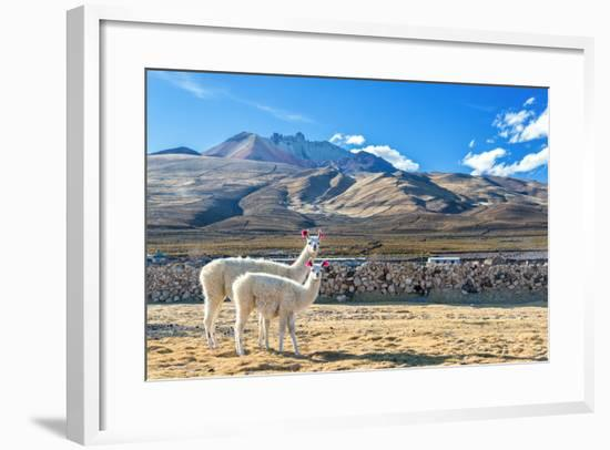 Pair of Llamas-jkraft5-Framed Photographic Print