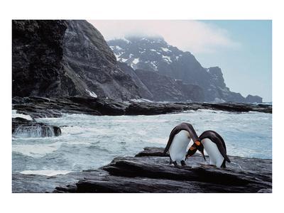 https://imgc.artprintimages.com/img/print/pair-of-penguins-rugged-coast_u-l-f74dwf0.jpg?p=0