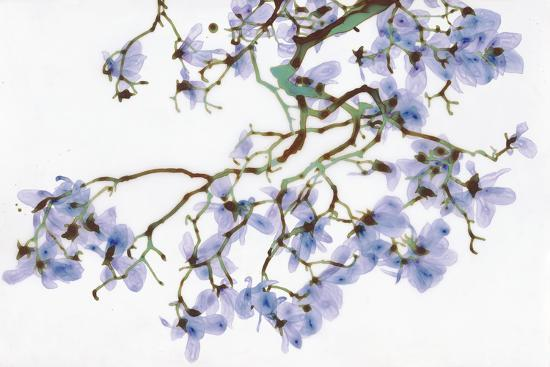 Pale Azure-Jackie Battenfield-Giclee Print