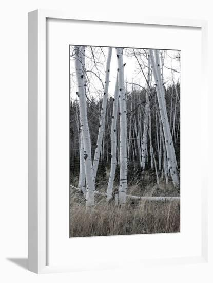 Pale Bark I-Danny Head-Framed Photographic Print