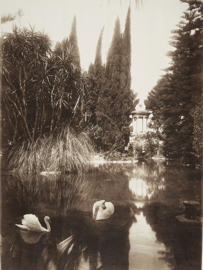 Palermo: in the Park of the Villa Tasca, 1895-Wilhelm Von Gloeden-Photographic Print
