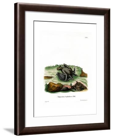 Pallas's Tube-Nosed Bat--Framed Giclee Print