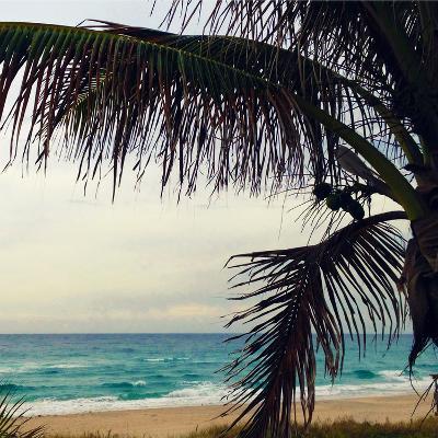 Palm and Beach-Lisa Hill Saghini-Photographic Print