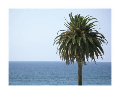 Palm at Moonlight Beach-Jenny Kraft-Art Print