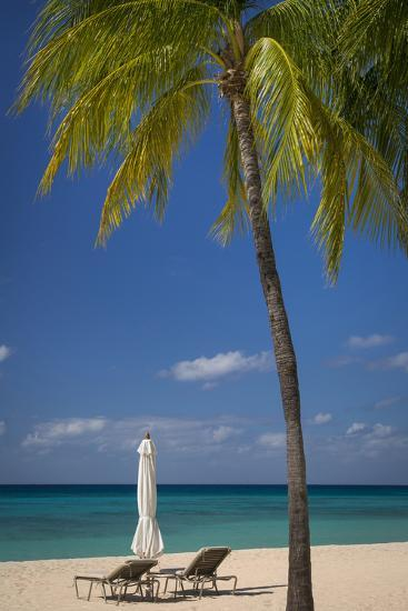 palm at seven mile beach grand cayman cayman islands west indies