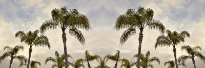 Palm Banner #2 - Color-Alan Blaustein-Photographic Print