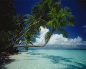 Palm beach, Maldives