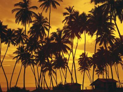 Palm Beach, Sundown-Thonig-Photographic Print