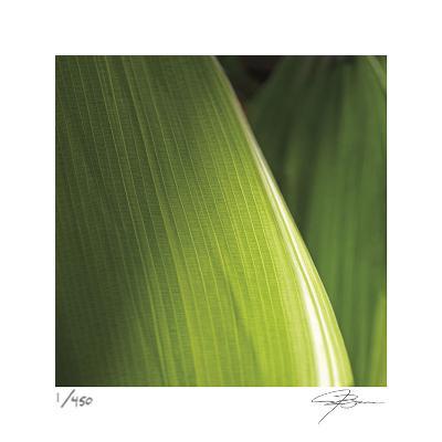 Palm Blades-Ken Bremer-Limited Edition