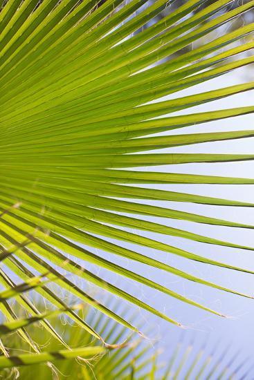 Palm Branch-Karyn Millet-Photo