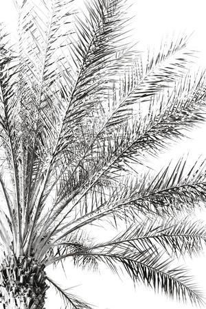 https://imgc.artprintimages.com/img/print/palm-breeze-noir_u-l-f9hz320.jpg?p=0