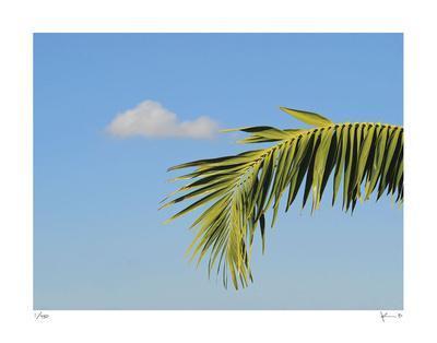 https://imgc.artprintimages.com/img/print/palm-cloud-islamorada_u-l-f6b28d0.jpg?p=0