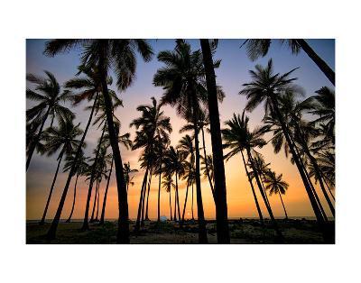 Palm Forest-Dennis Frates-Art Print