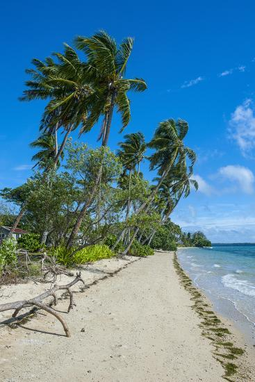 Palm Fringed White Sand Beach on an Islet of Vava'U Islands, Tonga, South Pacific-Michael Runkel-Photographic Print