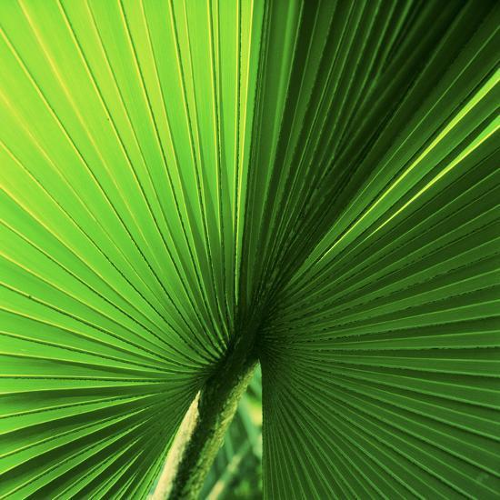 Palm Frond I-Bob Stefko-Photographic Print