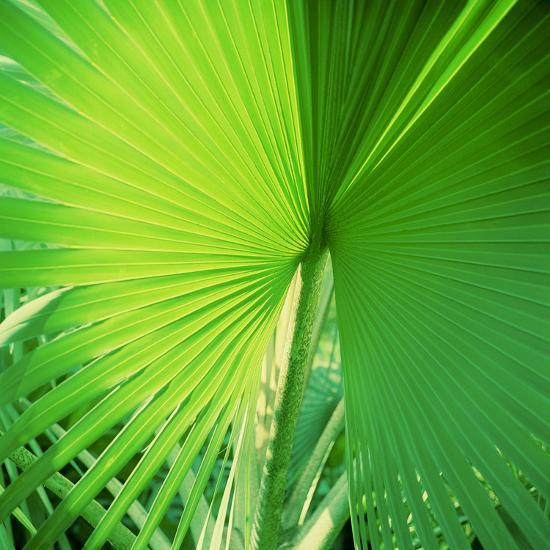 Palm Frond II-Bob Stefko-Photographic Print