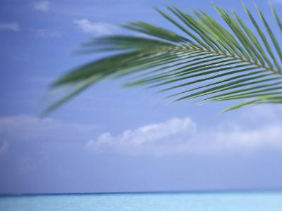 Palm Frond Over Tropical Water-Michele Westmorland-Photographic Print