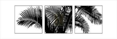 Palm Frond Triptych III-Bill Philip-Art Print
