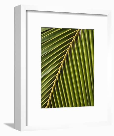 Palm Frond, Westpunt-Holger Leue-Framed Photographic Print