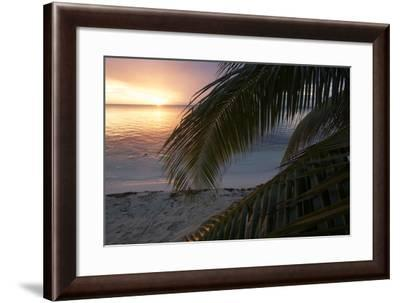 Palm Fronds at Sunset on the Beach-Gabby Salazar-Framed Photographic Print