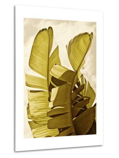 Palm Fronds III-Rachel Perry-Metal Print