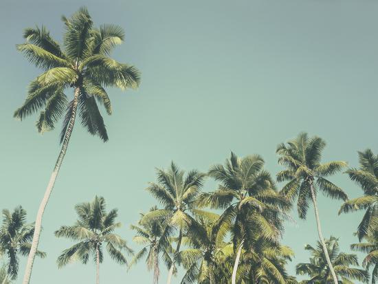 Palm Grove-Chris Simpson-Giclee Print