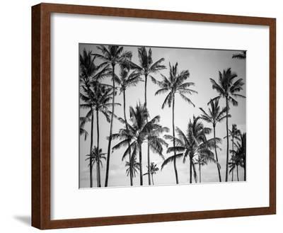 Palm Heaven-Design Fabrikken-Framed Premium Photographic Print