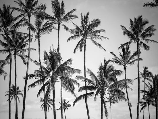 Palm Heaven-Design Fabrikken-Photographic Print
