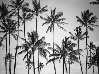 https://imgc.artprintimages.com/img/print/palm-heaven_u-l-q1g5zk70.jpg?p=0