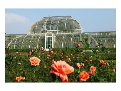 Palm house in the Royal Botanic Gardens, Kew, London, South of England, Great Britain--Art Print