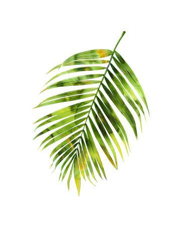 https://imgc.artprintimages.com/img/print/palm-i_u-l-f8vh400.jpg?p=0