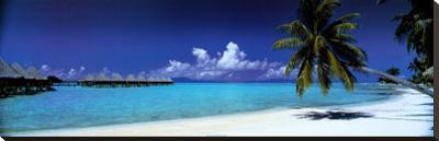Palm Island Retreat--Stretched Canvas Print