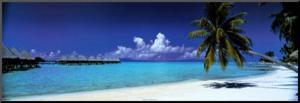 Palm Island Retreat
