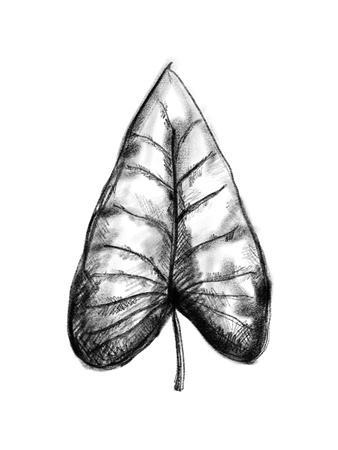 https://imgc.artprintimages.com/img/print/palm-leaf-illustration_u-l-f95b2y0.jpg?p=0