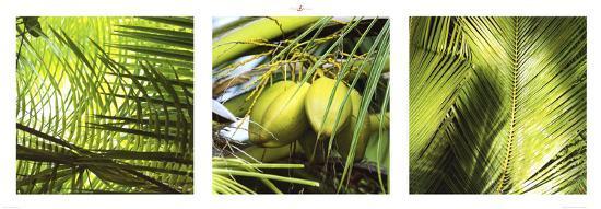 Palm Leaves-Philip Plisson-Art Print