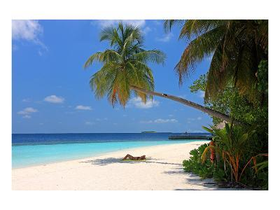 Palm-lined Beach at the Angsana Ihuru Hotel, Ihuru Island, North Male Atoll, Maldives--Art Print