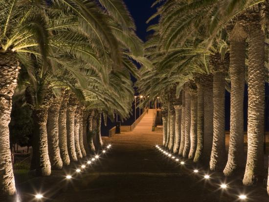Palm-Lined Path and Pier at Night-Holger Leue-Photographic Print