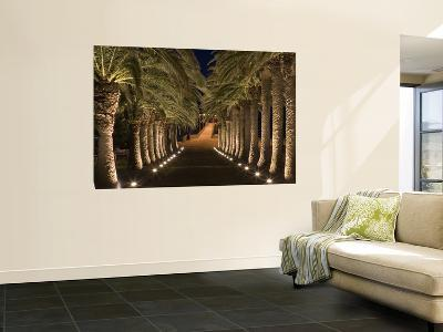 Palm-Lined Path and Pier at Night-Holger Leue-Wall Mural
