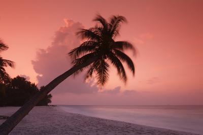 Palm on Filitheyo Island at Sunset-Massimo Pizzotti-Photographic Print
