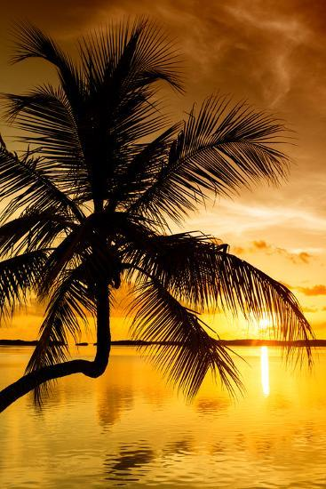 Palm Paradise at Sunset - Florida - USA-Philippe Hugonnard-Photographic Print